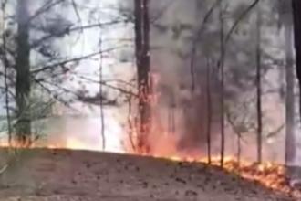 В Барнауле горит лес на одной из улиц