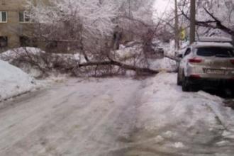 В Барнауле из-за сильного снегопада упало дерево
