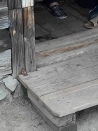 Барнаульцы жалуются на атаку летучих мышей