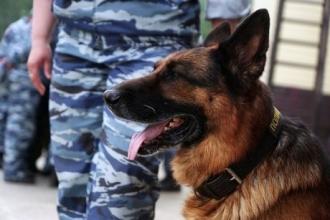 В Алтайском крае служебный пес нашел преступника