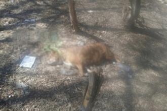 В барнаульском парке нашли тело собаки с веревкой на шее
