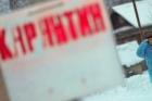 В Алтайском селе Акулово ввели карантин в связи с бешенством