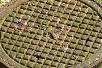 В Алтайском селе трехлетний мальчик провалился в канализацию и умер
