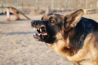 Владельцы собаки в Алтайском крае заплатят за нападение животного