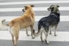 В Барнауле водитель сбил собаку и уехал