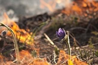 В Алтайском крае горят поля