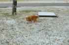 Барнаул накрыло первым снегом