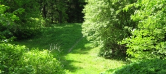 Дендрарий Барнаула - 10 гектаров необыкновенных растений