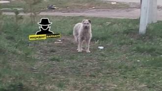 В Барнауле на ребенка напала собака