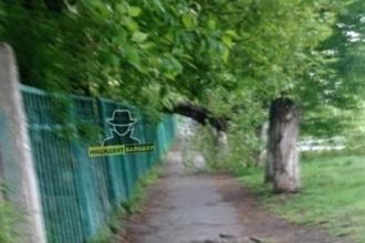 В Барнауле женщину с ребёнком чуть не придавило деревом