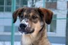 Ребенок, которого собака собака спасла от мороза, передан опекунам