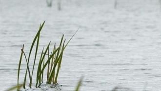 В Алтайском крае утонул четырехлетний ребенок