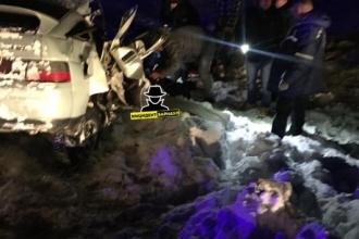 На Алтайской трассе произошло серьезное ДТП