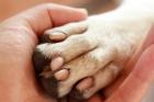 В Новоалтайске живодер изрезал бездомную собаку ножом