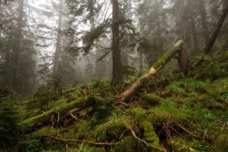 В Алтайском крае супруги избили знакомого до смерти в лесу