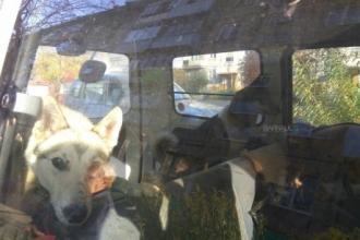 Очевидцы: Хозяин закрыл собак в закрытой машине больше, чем на сутки