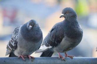 В фонтане Барнаула плавали мертвые голуби