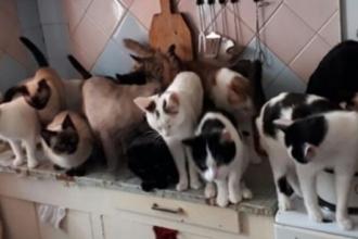 Барнаулке с 61 кошками грозит выселение