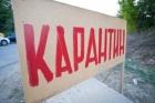 В посёлке Алтайского края введён карантин из-за бешенства