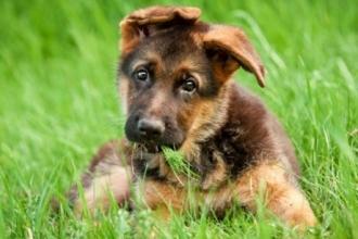 Полиция Барнаула начала проверку из-за убийства щенка