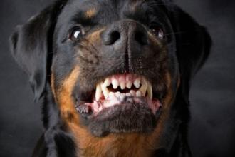 В Барнауле собака укусила ребенка