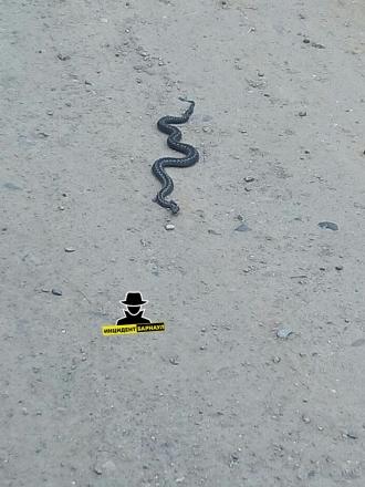 В Барнауле ядовитая змея укусила двух детей