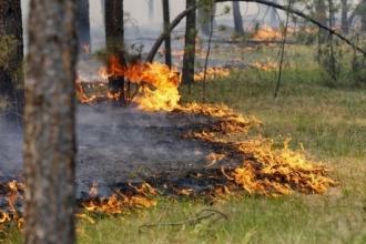 В Алтайском крае произошел пожар из-за горевшего авто
