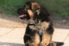 В Барнауле неизвестные замучили щенка