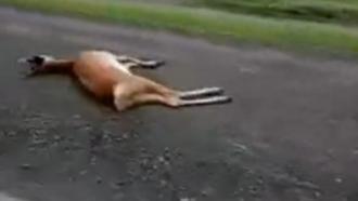 В Барнауле сбили маленького оленёнка