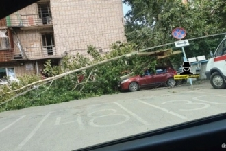 В Барнауле на припаркованное авто упало дерево