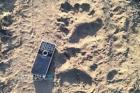Рядом с алтайским селом заметили следы медведя