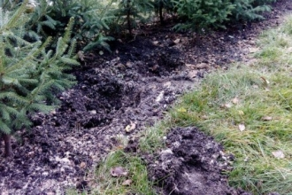 В Барнауле вандалы выкопали 22 елочки около Мемориала Славы