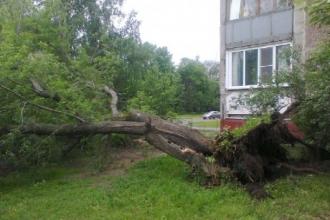 Около многоквартирного дома упало дерево